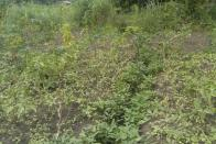 For Sale Plot - Neighborhood Cité Verman Kinshasa Mont-Ngafula