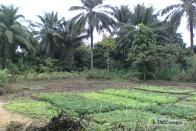 For Sale Plot - Neighborhood Lutendele Kinshasa Mont-Ngafula