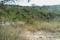 For Sale Plot - Neighborhood Matumpu Kinshasa Mont-Ngafula