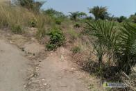 For Sale Plot - Neighborhood Mitendi Kinshasa Mont-Ngafula