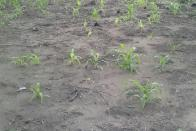 For Sale Plot - Neighborhood Kinkole Kinshasa Nsele