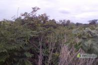 For Sale Land - Kasenga Road Lubumbashi Communes annexes
