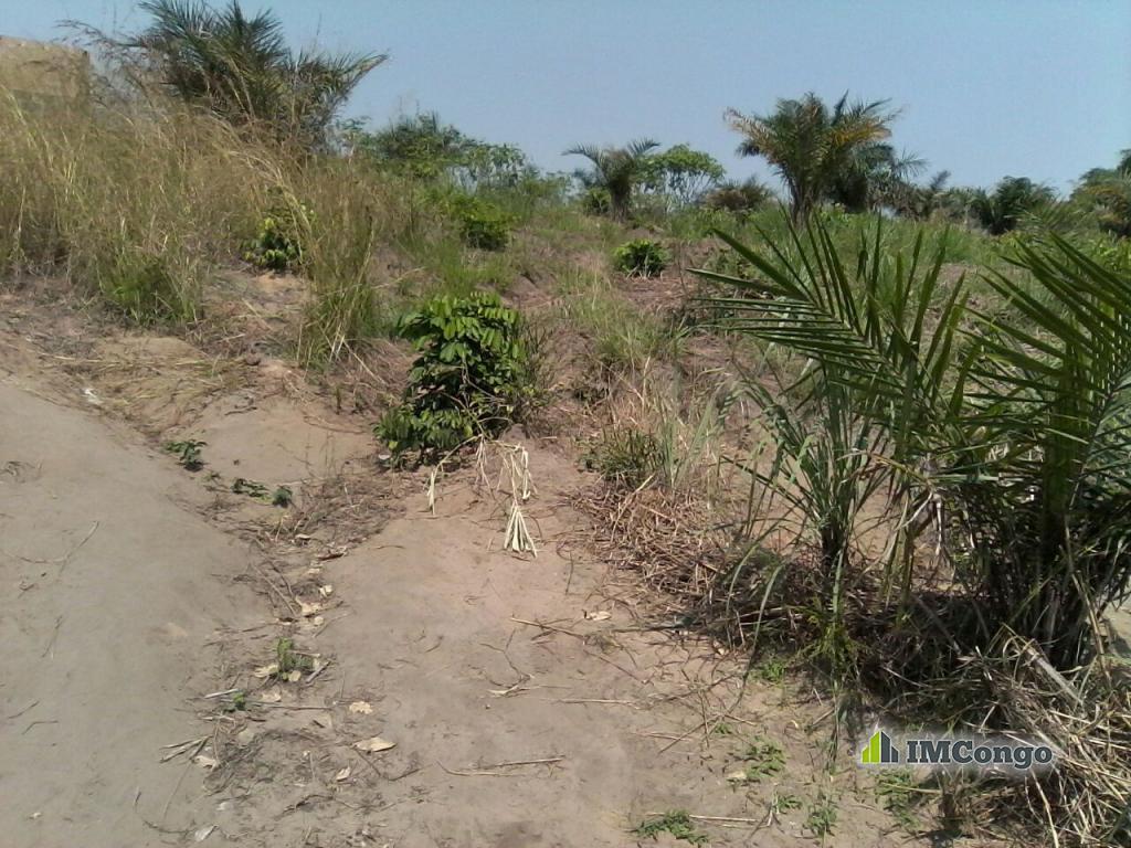 A vendre Concession Matumpu Kinshasa Mont-Ngafula