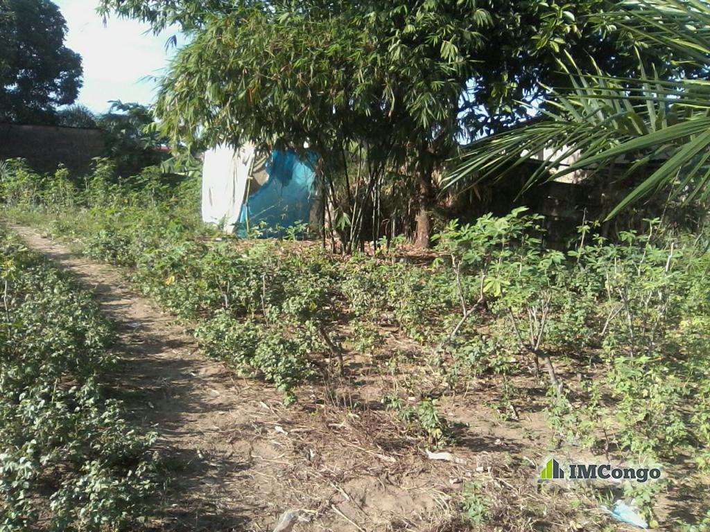 A vendre Terrain - Quartier Bianda Kinshasa Mont-Ngafula